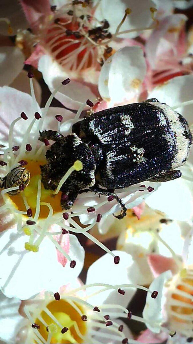 endlich ein scharfes Bild von den beiden Käfern