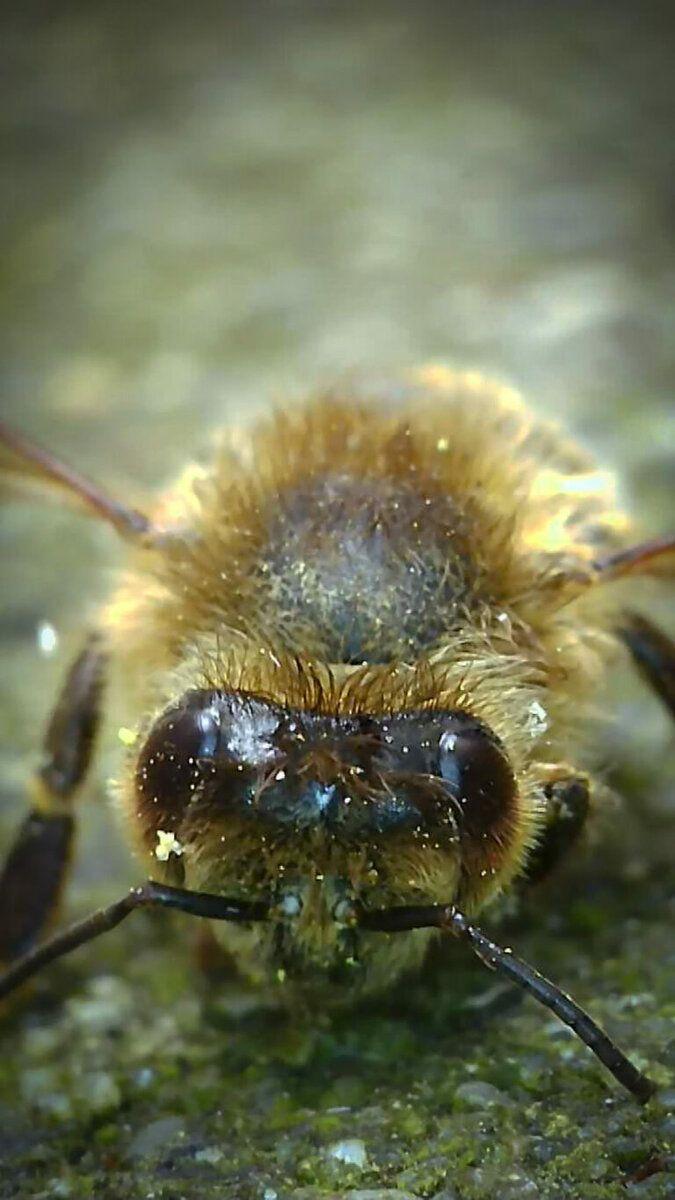 eine tote Biene