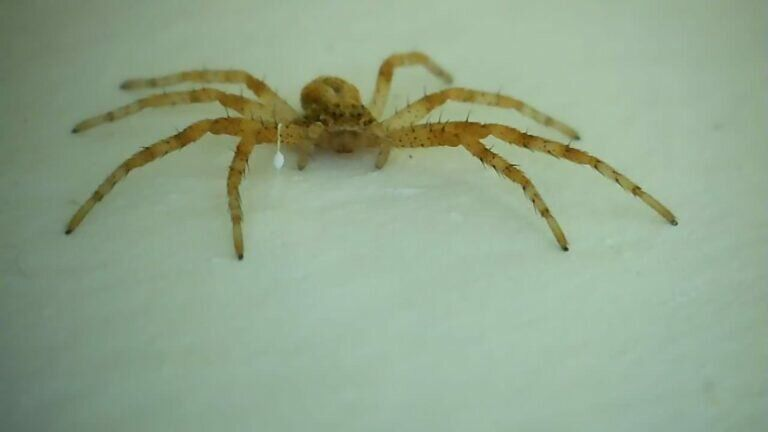 eine Mini Spinne