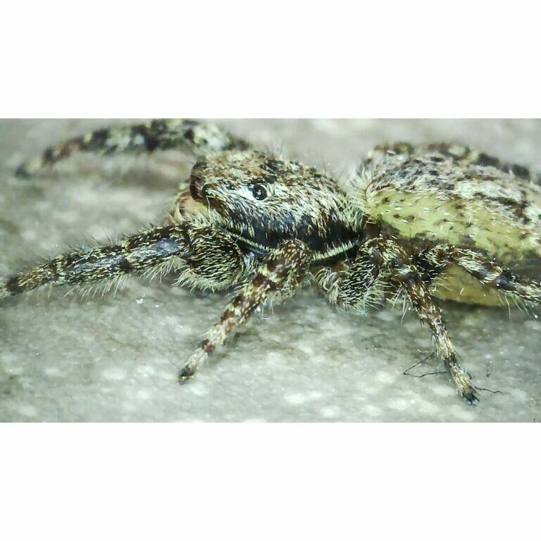 Spinne zu Gast (ca. 1 Cent Stück groß)
