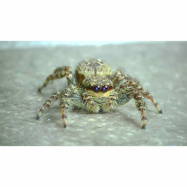 kleine Spinne wird mit dem Mikroskop riesig